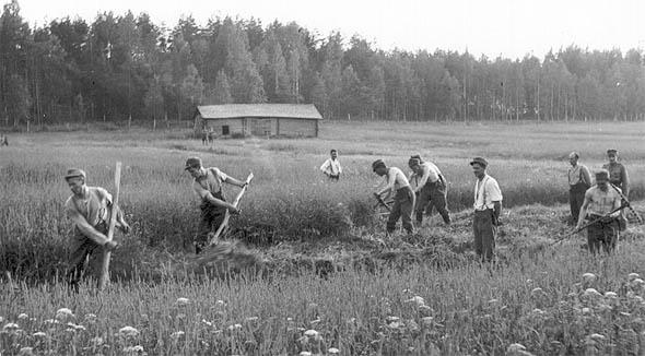 http://www.uta.fi/koskivoimaa/valta/1940-60/kuvat/niitto.jpg